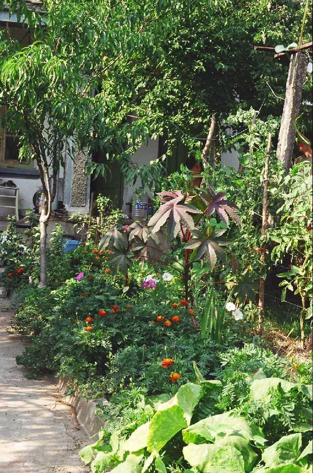 the house garden 2008