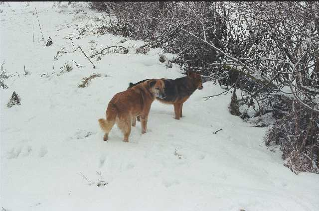 Jess and Tino in the snow