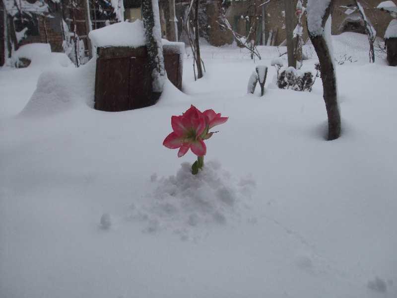 a winter blossom??