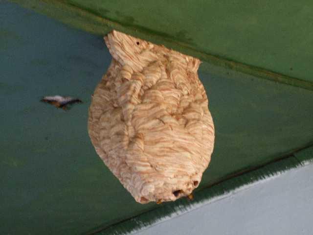 a hornet's nest