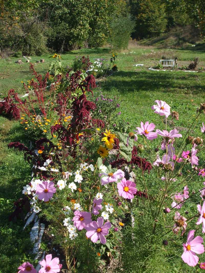 the garden 2012